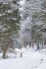 way (SpotShot) Tags: todtnau badenwürttemberg deutschland sony a7 ilce7 sonya7 minolta 85mm mc rokkor f17 mcii 85 minoltamcrokkor85mmf17 cold kalt snow schnee white weis way weg