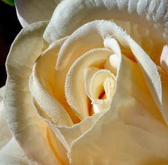 Silk Rose (jesse1dog) Tags: macromondays clothtextile cream rose silk macro shadow sunshine artificial texture