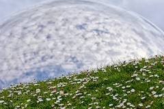 Daisies dot the grass as the Geode, an IMAX cinema, reflects the sky (alcowp) Tags: reflections printemps daisy flowers spring nature imax geode paris france