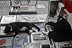 "Cats sleeping in bookstore display window along the ""AVE"", in the U District Seattle Washington State USA (Jim Corwin's PhotoStream) Tags: lifestyle editorial humaninterest universitydistrict theave seattle photography horizontal portrait attitude citylife streetscenes urbanscenes nonconformity casual individuality eccentric outdoors alongstreet sleeping sleep sleepy cat cats catsasleep displaywindow bookstore bookstorealongave retro 1990s uniqueplace books booksonsale imagemanipulation"
