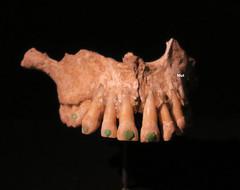 Maya-Ausstellung, Speyer (Mutnedjmet) Tags: maya ausstellung speyer kultur guatemala jade zähne knochen oberkiefer