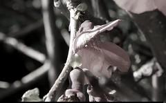 Par la voie ferrée  (17) (Sebmanstar) Tags: voie ferrée macro art canon eos 7d research alpes europe europa explore travel tourisme tourism original photography landscape light france french fleur flower provence digital digne les bains campagne creative creation ballade nature numerique campaign