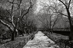 Empty Benches (Joe Josephs: 3,122,834 views - thank you) Tags: nyc newyorkcity travel travelphotography joejosephs outdoorphotography photojournalism â©joejosephs2017 ©joejosephs2017 blackandwhitephotography blackandwhite parks urbanparks centralpark centralparknewyork