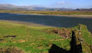 Ynys-hir RSPB Nature Reserve - Wales 240317 (8)