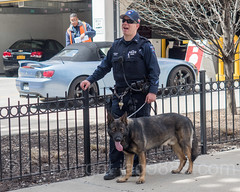 NYPD Canine Police Squad, 2017 Yankees Home Opener at Yankee Stadium, The Bronx, New York City (jag9889) Tags: openingday usa homeopener policeofficer bronx 20170410 canine newyork southbronx yankeestadium nypd newyorkcity yankees 2017 al allamericacity americanleague ballpark baseball baseballteam bombers cop dog finest firstresponder k9 lawenforcement majorleaguebaseball ny nyyankees nyc nyy newyankeestadium newyorkcitypolicedepartment newyorkyankees officer outdoor pinstripes police policedepartment stadium thebronx thebronxbombers theyanks unitedstates unitedstatesofamerica jag9889 us