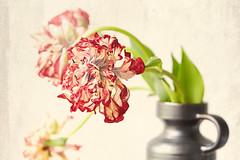 Dedicated To The Old Masters (macplatti) Tags: tuliptulpe red rot vintage vase fruehling springtime on1photoraw texture digitalart art koblach vorarlberg austria aut