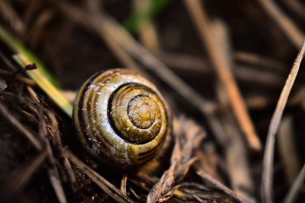 Shell in the grass