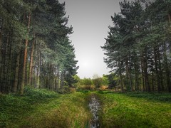 Dividing (andystones64) Tags: branches grass water stream trees lincolnshire nlincs outdoors woodland reserve nature messingham