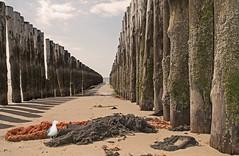 Bunen1 (lotharmeyer) Tags: strand meer westenschouwen diagonale perspektive sea tiere beach nature natur schatten spiegelung strandgut water wasser