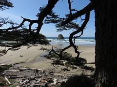 beachy goodness (carolyn_in_oregon) Tags: crescentbeach cannonbeach pacificocean ecolastatepark coast alicia chiron