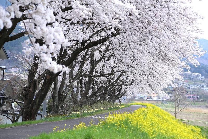 會津若松出發的春櫻行程