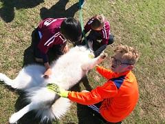 frida gets a good luck belly rub. (snowdeal) Tags: dog animal malamute frida soccer