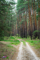 Forest /  (andreyalpha) Tags: street wood inspiration tree green nature weather pinetree pine forest spring village outdoor walk sony country ukraine fresh april kharkiv         slta37