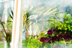 Through Glass (WDLandry) Tags: park ireland stilllife flower window glass photo nikon bokeh kerry muckross greenhouse national killarney d7100 365daysofphotos