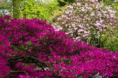 Japanse Tuin Clingendael 2014-02271 (Arie van Tilborg) Tags: japanesegarden denhaag thehague clingendael japansetuin clingendaelestate landgoedclingendael