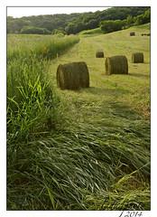 Season's first bales. (lada/photo (on a road)) Tags: wisconsin farming fields hay hayfield haybales balesofhay balesinafield ladaphoto