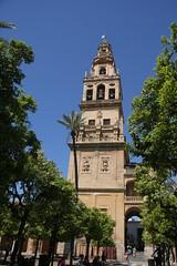 PATIO DE LOS NARANJOS (ORANGE TREE COURTYARD), (Liam Cheasty) Tags: spain cathedral minaret andalucia belltower cordoba mezquita patiodelosnaranjos motorhometravel orangetreecourtyard