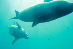 (Tottolandia) Tags: trip vacation españa valencia animal underwater acquarium ciudad artes span ciencias oceanografic ciudaddelasartesylasciencias loveanimals acquarius