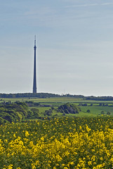 Emley Moor Mast (littlestschnauzer) Tags: uk blue west green tower sunshine yellow rural landscape countryside skies view yorkshire farming may seed sunny landmark farmland rape elements crop oil fields crops mast moor huddersfield transmitter 2014 emley