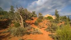 WP_20140525_17_46_02_Pro__highres (Jenny McNeilly) Tags: red arizona landscape rocks desert sedona az redrockstatepark littlehorsetrail
