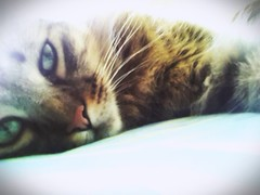 2014-05-28_12-23-15 (annitatobar) Tags: gatos animales mascotas