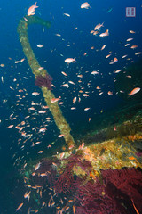 Grec - Crane (Rhapsody-In-Blue) Tags: underwater shipwreck wreck grec porquerolles pave portcros wreckdive sagona legrec underwaterambiance