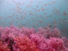 Ko Lipe Diving - Stonehenge (Ko Lipe Diving) Tags: fish beach coral thailand island marine paradise underwater nemo scuba diving tropical diver padi longtail lipe andaman kolipe tarutao dsd kohlipe