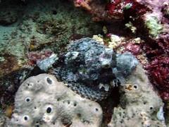 hidding fish tulamben bali drop off other scuba gear (scuba_dot_com) Tags: bali fish other gear scuba drop off jpg hidding tulamben fishhiddingfishtulambenbalidropoffotherscubagearjpg