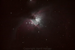 """Orion Nebula by Aprill Harper • <a style=""""font-size:0.8em;"""" href=""""http://www.flickr.com/photos/74627054@N08/14335007240/"""" target=""""_blank"""">View on Flickr</a>"""