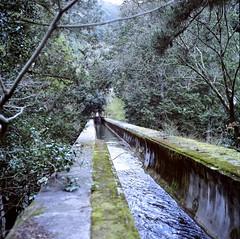 94710010 (Darjeeling_Days) Tags: hasselblad 京都 中判 プロビア