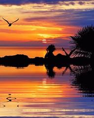 ღ♪*.....I'll fly with you.....*♪ღ (antonè) Tags: sardegna sunset sea woman donna tramonto mare sardinia seagull cielo sole riflessi gabbiano riflesso stintino photoroom antonè veryflickr weloveart whiteiswhite onlymyfavorite incognitogroup