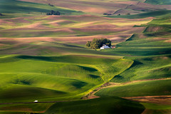 Steptoe Butte (EdBob) Tags: road travel trees west green nature barn rural truck sunrise countryside washington highway butte farm country transport farmland hills valley transportation crops plow agriculture washingtonstate inc isolated planting colfax agricultural palouse easternwashington sowing steptoe steptoebutte edmundlowe absolutegoldenmasterpiece allmyphotographsare©copyrightedandallrightsreservednoneofthesephotosmaybereproducedandorusedinanyformofpublicationprintortheinternetwithoutmywrittenpermission edmundlowephotography edmundlowestudios