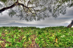 Through the Bushes (Simon's Snaps) Tags: hawaii bushes photomatix tonemapped tonemap