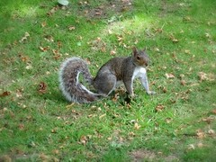 Squirrel at Botanical gardens (jayneyyy) Tags: park wild cute green nature beautiful grass animal animals gardens garden botanical grey furry squirrel natural wildlife adorable fluffy creature botanicalgardens wildanimals