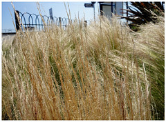 Wispy grass (southseadave) Tags: textures grasses canoelake southseaseafront rx100