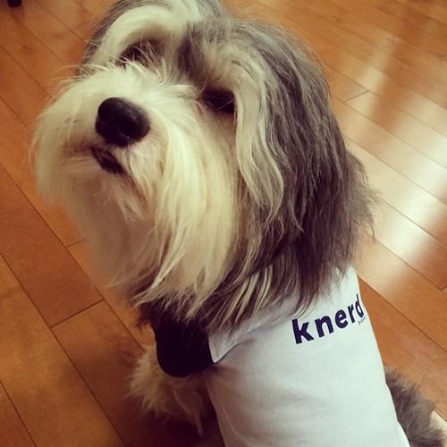 A true #knerd #knewton @gizemkucukoglu