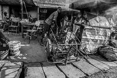 Cameroon Photo Essay (Donal James Boyd) Tags: life africa travel white black west landscape village northwest market farm african farming harvest culture seed palm farmer cameroon context bamenda