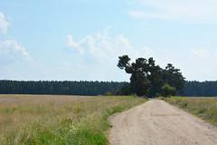 NationalparkMuritz_13 (_windprincess) Tags: park germany deutschland nationalpark reisen fahrrad radtour mritz mritznationalpark