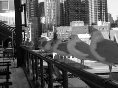 New York, Pier 17
