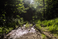 A Day After Rain (SerpaDesign) Tags: trees green nature grass mud trail rays leafs tannerserpa serpadesign