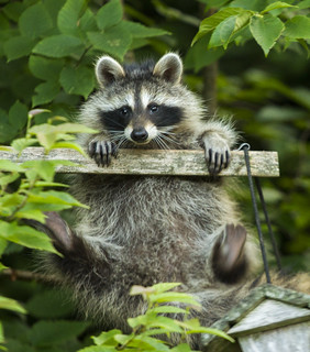Cute and adorable or backyard pest