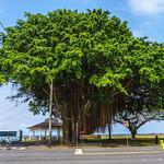 Mo'oheau Park. Hilo, Hawaii.