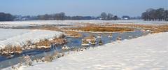 Oude Kene (HansHolt) Tags: winter snow sneeuw ice ijs water brook beek reed riet trees bomen meander farms boerderijen landscape landschap oudediep oudekene hoogeveen drenthe netherlands olympusmju9010 olympusstylus9010