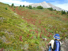 Alberta Foothills Alpines (Mr. Happy Face - Peace :)) Tags: albertabound art2017 canada150years nature rockies hiking archives mountains wilderness canadaparks yyc environment sky cloud landscape