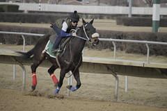 _MG_5692 (thinktank8326) Tags: thoroughbred racehorse racetrack equine horse hawthorne illinois canon eos 7d