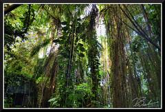 Bioshere_7116d (bjarne.winkler) Tags: day8 photo foto safari the north side is rainforest biosphere 2 tucson az remember 1 mother earth