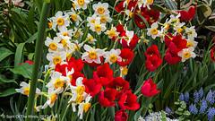 "A Little Color For The Day (jimgspokane) Tags: gaiserconservatoryspokane flowers spokanewashingtonstate ""nikonflickraward"" otw"