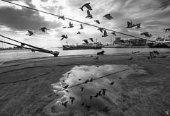 The birds (Vangelis Tzertzinis/GDISTUDIO.COM) Tags: sea bw bythesea bwseascape birds dog dramaticsky greece port piraeus ship