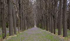 that smell (eDDie_TK) Tags: colorado co weldcountyco weldcounty millikenco trees tree