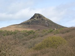 CIMG1847 (robhutchings121) Tags: nature sky flower landscape green blue tree light cloud sun flowers grass spring trees roseberry topping mountain hill shooting box people busy summer bluebell wood forrest woods newton great ayton bluebells bluebellwood casio